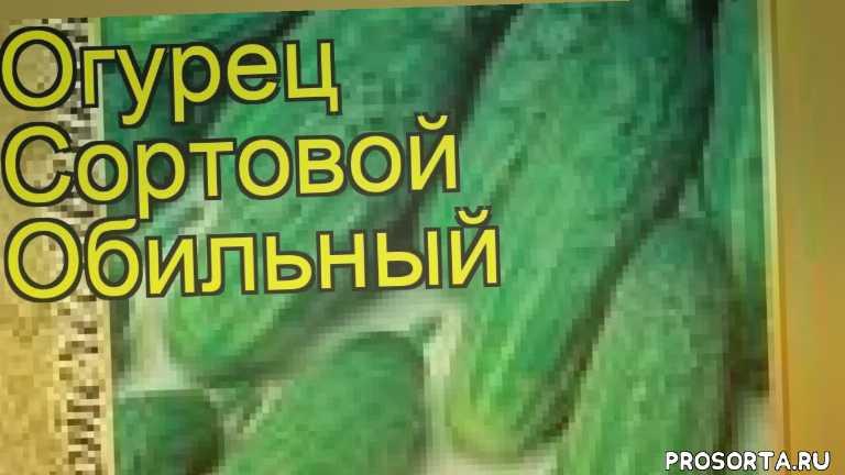 огурец сортовой обильный посадка и уход, огурец сортовой обильный уход, огурец сортовой обильный посадка, огурец сортовой обильный отзывы, где купить семена огурец сортовой обильный, купить семена огурца обильный, семена огурец сортовой обильный, видео огурец сортовой обильный