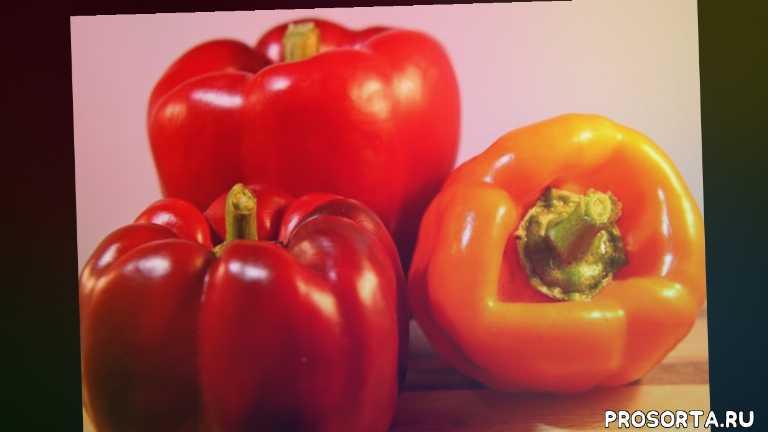 пикиров, что с рассадой случилось, почему пропадает рассада перца, личим рассаду перца и помидор, грибковые заболевания перца, заболевание рассады перца, оэдема на рассада перца, бользни рассады перца