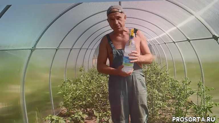 участок, дача, огород, теплица, перцы, томаты, food (tv genre), tomato (food)