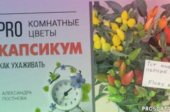 перцы, огород на подоконнике, огород на окне, мои цветы, огород на балконе, огород, как ухаживать за комнатным перцем, перчик в горшке