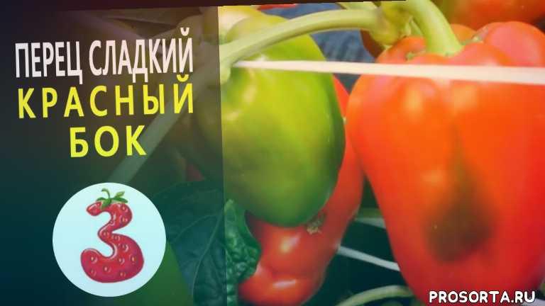 канал земляника, перец для консервирования, прец для фарширования, крупный сорт, толстые стенки, прец красный бок, салатный перец, купить семена перца