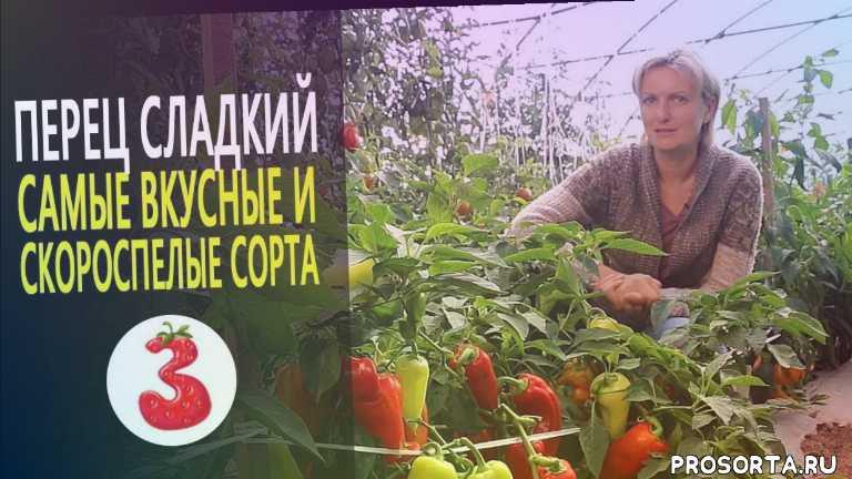 луковичные, цветок, кустарники, растения, рассада, сады россии, уход, обзор