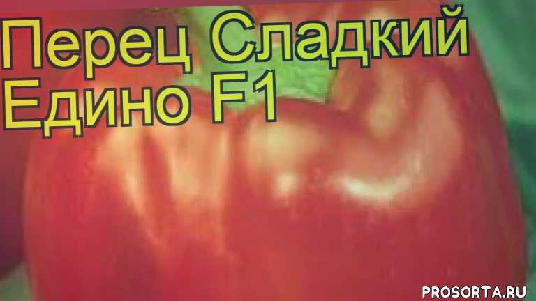 перец сладкий едино f1 посадка и уход, перец сладкий едино f1 уход, перец сладкий едино f1 посадка, перец сладкий едино f1 отзывы, где купить семена перец сладкий едино f1, купить семена перца едино f1, семена перец сладкий едино f1, видео перец сладкий едино f1
