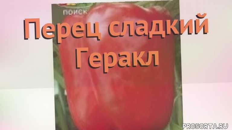 геракл семена, семена, семена перца, семена перца геракл, перец сладкий геракл как сажать, перец сладкий геракл обзор как сажать, перец сладкий геракл обзор, перец геракл обзор как сажать