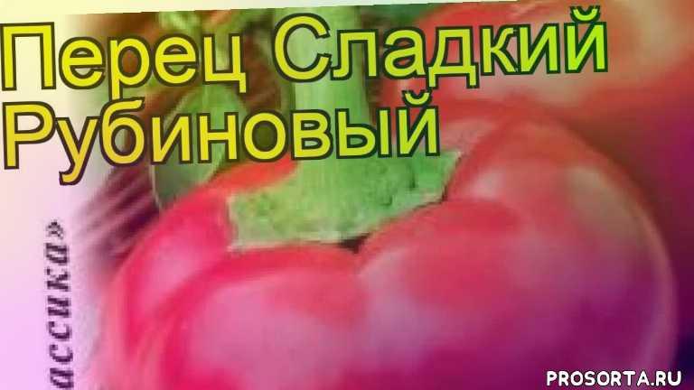 перец сладкий рубиновый посадка и уход, перец сладкий рубиновый уход, перец сладкий рубиновый посадка, перец сладкий рубиновый отзывы, где купить семена перец сладкий рубиновый, купить семена перца рубиновый, семена перец сладкий рубиновый, видео перец сладкий рубиновый