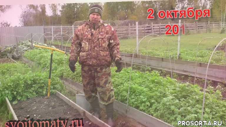 Подготовка грядки для посадки озимых культур