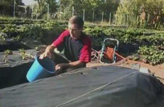 подготовка почвы осенью, подготовка почвы на даче, подготовка почвы и внесение удобрений, подготовка почвы и посадка клубники, подготовка почвы для посадки клубники, подготовка почвы под агроволокно, подготовка почвы под клубнику, почва под клубнику