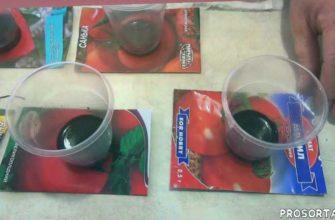огород, сад, дача, помидоры, томаты, подготовка семян к посеву, замачивание семян помидор, протравливание семян томатов