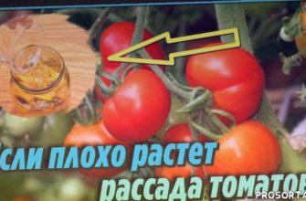 внесение удобрений, огород, универсальная подкормка, советы огородникам, дачные советы, сад и огород, лучшее удобрение для помидор, выращивание помидор