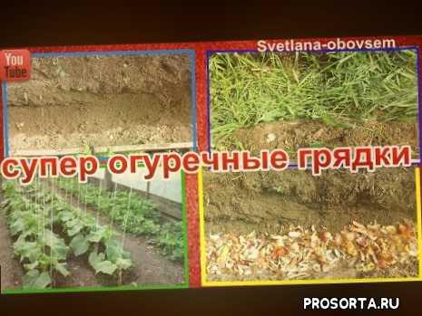 обеззараживание грядки, удобрение для грядок, подготовка грядки под огурцы весной, как обогатить почву, как улучшить почву, огуречная грядка, удобрение для огурцов, сидераты