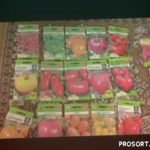 Получил в подарок интересные сорта помидоров