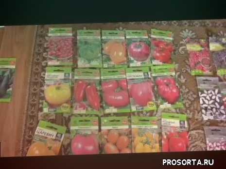 интересные сорта помидоров