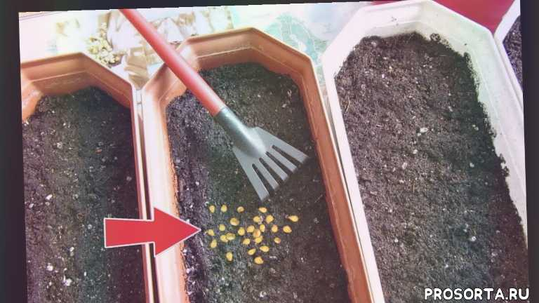 помидоры март, выращивание рассады от а до я, март рассада томатов, как сажать помидоры в марте?, март сад огород, март, март рассада, март посев на рассаду помидоры