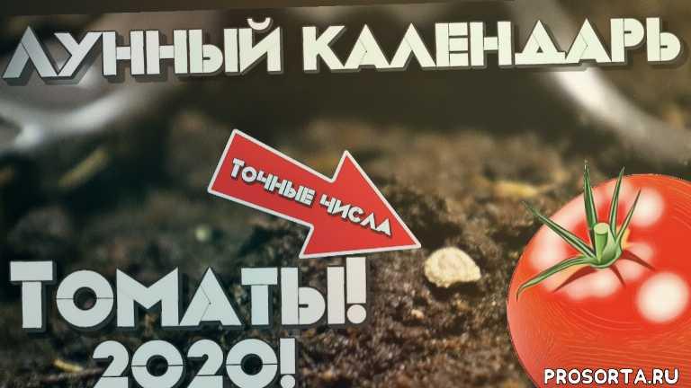 лунный посевной календарь томатов 2020, посев помидор +на рассаду, томат посев 2020, лунный календарь посева томатов +на 2020 год, посев томатов +на рассаду, посев томатов +в 2020, когда сажать помидоры в 2020?, посев томатов +на рассаду +в 2020