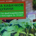 ПОСАДКА КАБАЧКОВ В ОТКРЫТЫЙ ГРУНТ//подготовка грядки под кабачки// выращивание кабачков в компостере