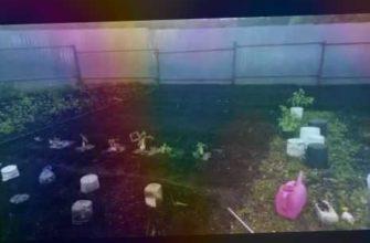 "Посадка Помидор ""БОЛОТО"" и ""СИБИРСКИЙ МАЛАХИТ"" под ВЕДРА.  15.05.2019г."