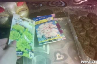 рассада, подкормкидляэустомы, эустомаподкормки, сеянцыэустомы, рассадаэустомы, цветы, сортапетунии, петуния