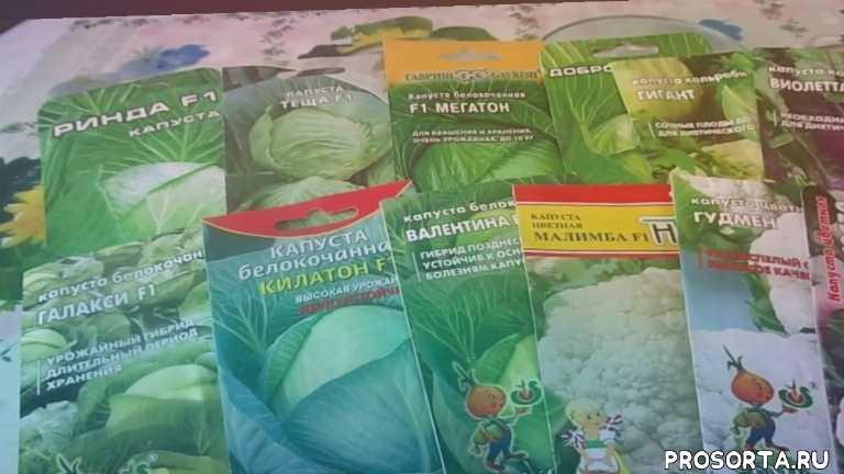 на глубину - 0.5 - 1 см., расстояние между растениями - 3 см., посев пророщенными семенами., кольраби., цветную: раннюю и среднюю;, средние и позднеспелые сорта;, сеем капусту : белокочанную - ранние, посев разных сортов капусты на рассаду без пикировки.
