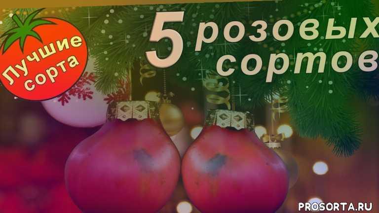розовые томаты семена, томат розовый гигант, томат чудо земли, томат медовый, томат медвежья лапа, томат розовый мед, розовые томаты семена, сорта розовых помидор