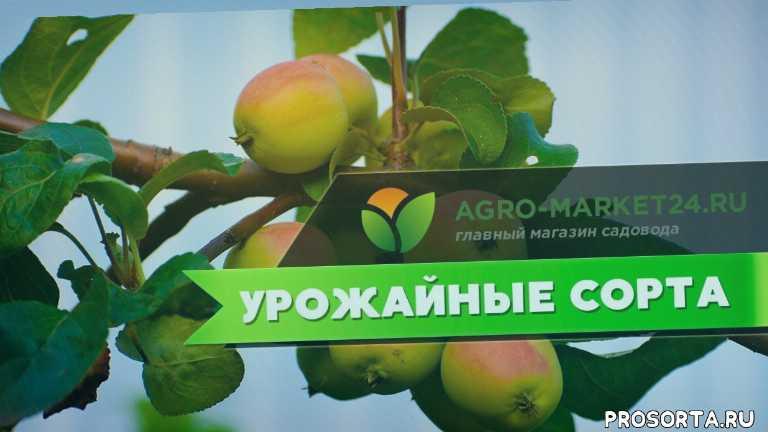яблони видео, лучшие яблони, можно ли яблоню, посадка яблони, молодая яблоня, обрезка яблонь, обрезки яблонь, сорта яблонь фото отзывы