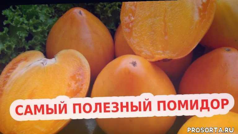 вкусные желтые помидоры, урожайные помидоры, желтые помидоры, сорт золотое сердце, вкусные желтые томаты, самые урожайные томаты желтые, низкорослые томаты, сорт желтых томатов