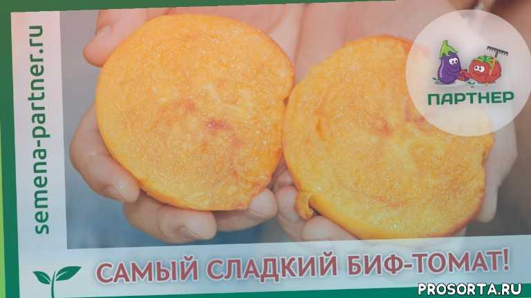 блокин-мечталин, блокин-мечталин василий иванович, выращивание томатов, урожайный огород, семена партнер, агрофирма партнер, семена с доставкой, купить семена