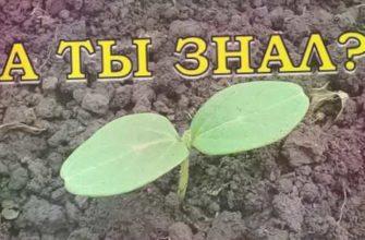 огурцы видео, огурцы +в открытом, почему огурцы, выращивание огурцов, огурцы +в грунт, огурцы +в теплице, посадка огурцов, семя огурцов
