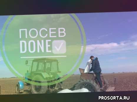 сеялка зерновая, сеялка, мтз, зерно, как сеять зерно, как прсеять ячменб, сеем ячмень, посев 2020