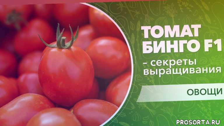 технології вирощування томату, технологии выращивания томата, сливовидна форма bingo f1, сливовидная форма bingo f1, секреты выращивания, секрети вирощування, ранний томат, ранній томат