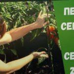 Семена перца на 2020 год. Мой выбор: Престиж  - Семена, Гавриш, Уральский дачник и Bejo Zaden.