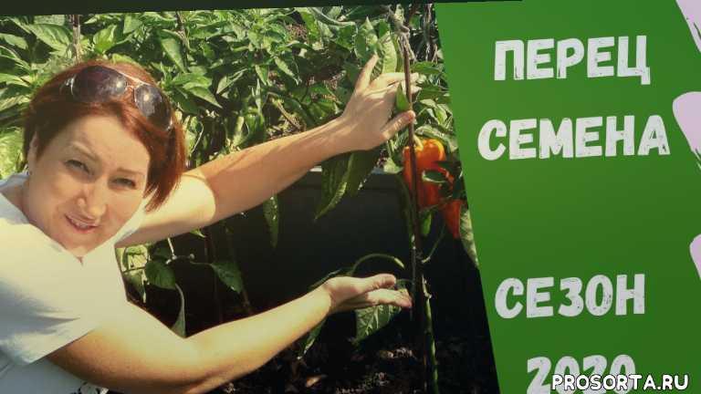 обзор семян, сад, огород на севере удмуртии, перец bejo zaden, перец уральский дачник, перец гавриш, перец престиж - семена, перец сладкий фатима