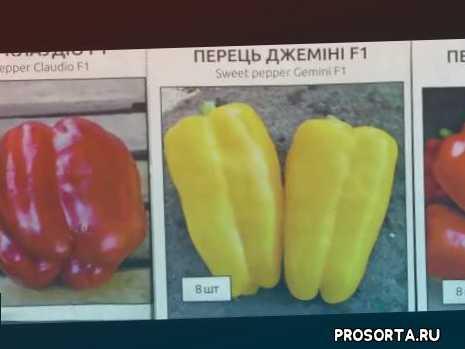 гібриди перцю, краще насіння перцю, як вибрати насіння, насіння перцю, обзор семян, как выыбрать перец, сорта перца, лучшие гибриды