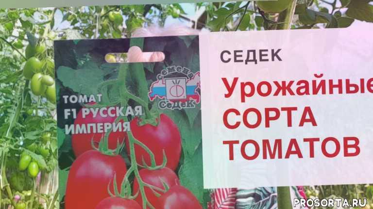 помидоры в теплице, дача, огород, выращивание томатов, томаты в теплице, урожайный огород, во саду ли в огороде, седек