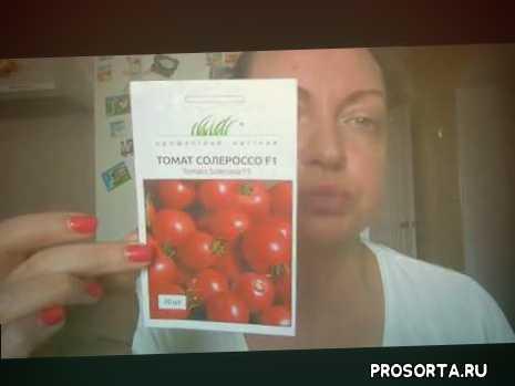 помидоры для открытого грунта, помидоры для засолки, лучшие сорта помидор, огород, дом в деревне, семена низкорослых томатов, сорта низкорослых томатов, низкорослые томаты