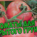 Семена томатов ? Лучшие сорта томатов для открытого грунта ? Агрофирма ГАВРИШ