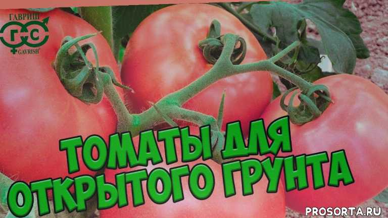 открытый грунт, семена 2018, покупка семян, обзор, гибрид, помидор, лучшие сорта томатов, обзор хитсад