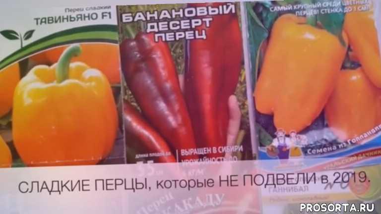 виноград в подмосковье, как вырастить абрикос из косточки, семена перца, болгарский перец, урожайный огород, топсад, дача, огород
