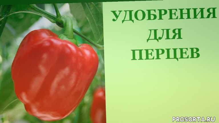 во саду ли в огороде, ирина воловик, чем подкормить сладкий перец, чем подкормить перец для роста, подкормить перцы грунте, подкормить перец цветения, чем подкормить перцы, удобрять перец цветении