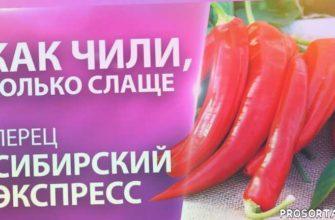 урожайные томаты, красные томаты 2020, томат 2020, перец маринованый, сладкий перец, перец на зиму рецепты, перец красный, салатный перец