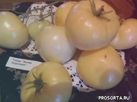 белая королева, отзывы огородников о томате, уход за томатом, томат «белая королева» характеристика и описание сорта томат