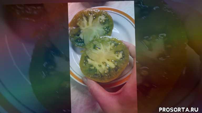 Сорт томатов Зеленые