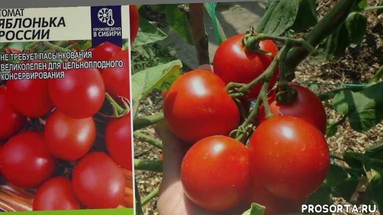 томаты для консервирования, томат яблонька россии, любимая усадьба, ранние томаты, для юга, обзор, лучшие сорта, выращивание