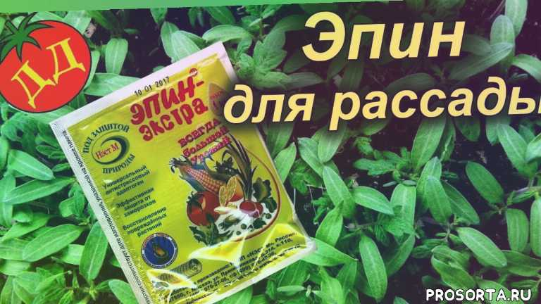 эпин экстра для рассады, эпин для растений применение, как разводить эпин, эпин применение для рассады, эпин инструкция для рассады, эпин для рассады, эпин для растений, эпин инструкция по применению