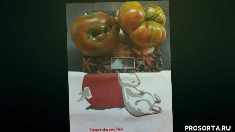 вкусные крупные томаты, сладкие томаты, полосатые крупные томаты, шоколадные томаты, коричневые томаты, томат амурский тигр аэлита, томаты для сибири, супер крупные томаты
