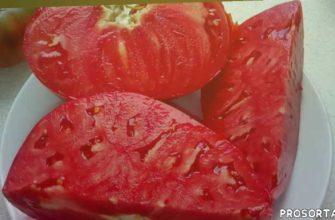экзотические томаты, лучшие сорта томатов для отрітого грунта, лучшие сорта томатов, биф-томат, лучший сорт томата, высокорослые томаты для открытого грунта, высокорослые томаты, помидор