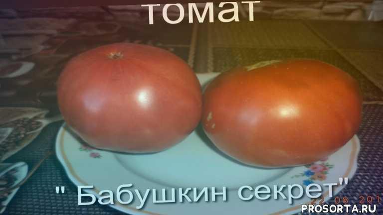 бабушкин секрет, томат