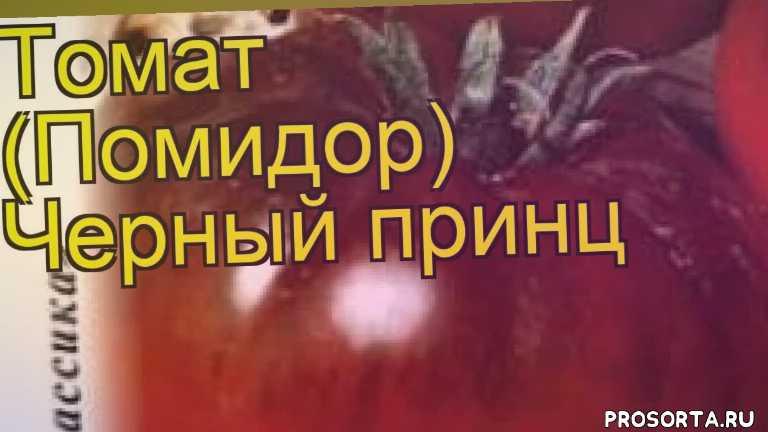томат черный принц какие растения сажают рядом, томат черный принц посадка и уход, томат черный принц уход, томат черный принц посадка, томат черный принц отзывы, где купить семена томат черный принц, купить семена томата черный принц, семена томат черный принц