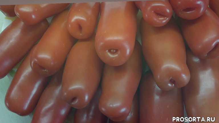 томат дрова, урожайный томат, ранние томаты, мясистый томат, сладкие томаты, самый вкусный, дегустировать томаты, дегустация