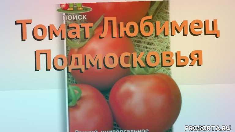 томат обыкновенный любимец подмосковья обзор, томат любимец подмосковья обзор как сажать, травы, обыкновенный томат любимец подмосковья обзор как сажать, обыкновенный томат любимец подмосковья обзор, обыкновенный томат, обыкновенный томат любимец подмосковья, любимец подмосковья обзор