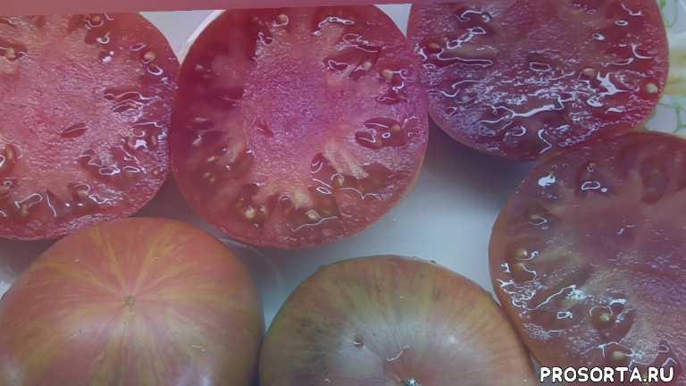 малиновая зебра, томаты биколор, урожайный томат, мясистый томат, сладкие томаты, самый вкусный, дегустировать томаты, дегустация